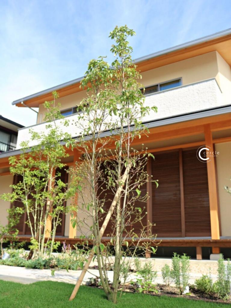 木のぬくもり漂う住宅とナチュラルなシンボルツリー